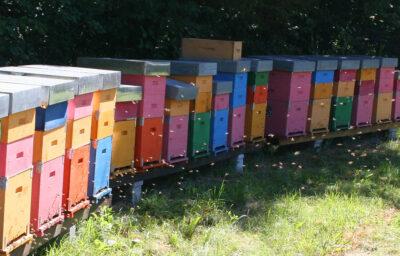 Bijenkasten Il Tribbio